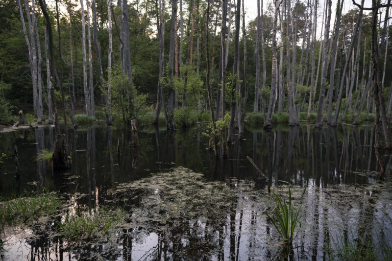the swampy marshlands of the everglades