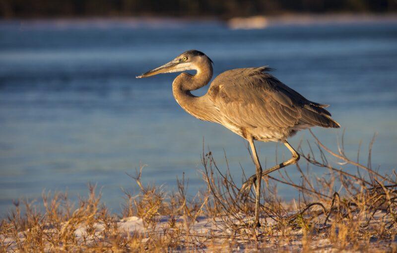 shore bird on a sand dune